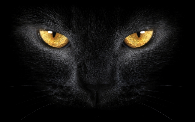 Black-Cat-eyes_tn2.jpg